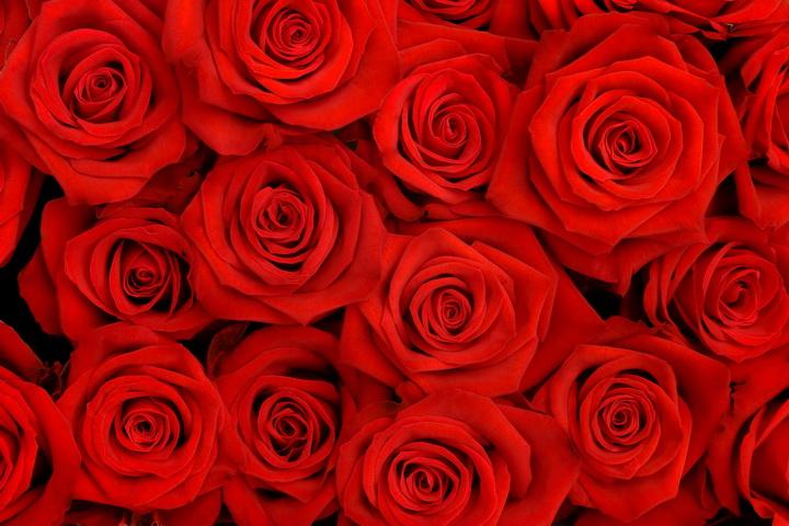 """3D Фотообои  """"Алые розы"""""""