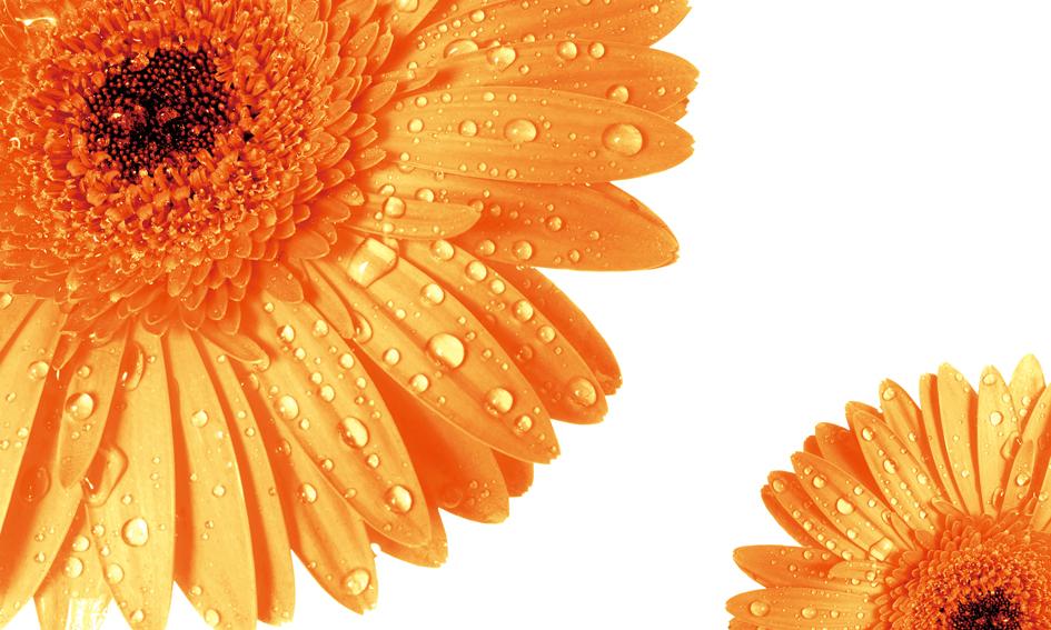 3D Фотообои Солнечные герберыЭти чудесные 3д фотообои Герберы подарят Вам атмосферу тепла и весны.<br><br>Создайте в своем доме весеннее настроение, окутайте себя невероятным комфортом и уютом с этим чудесным объемным эскизом, выполненным в очень ярких и радужных красках.<br><br>Даже в плохую погоду и холод за окном ваша комната будет наполнена теплом и хорошим настроением.<br>kit: None; gender: None;
