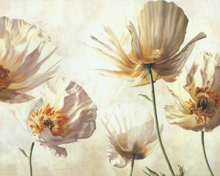 3D Фотообои Белые макиФотообои «Белые маки» - эксклюзивное чудо весны, восхитительная нежность.<br>Палитра их – волшебна, радостна и полна теплоты, а лунно-серебристый блеск восхищает взор.<br><br>Ангельские цветы, с красочными лепестками, будто покрытыми лаком. Гордо вскинув бутоны, они тянутся к солнцу. Все поляна сказочно прекрасна. Цветок неги и грез. Это растение уникально и удивительно эстетично.<br><br>Изображения на стену с маками отлично подойдут для гостиной и спальни. Будут восторгать, и удивлять своей уникальностью, Вас и Ваших близких.<br>kit: None; gender: None;
