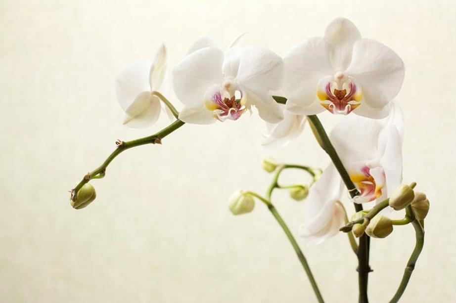 """Фотообои """"3D Фотообои """"Белая орхидея"""""""""""
