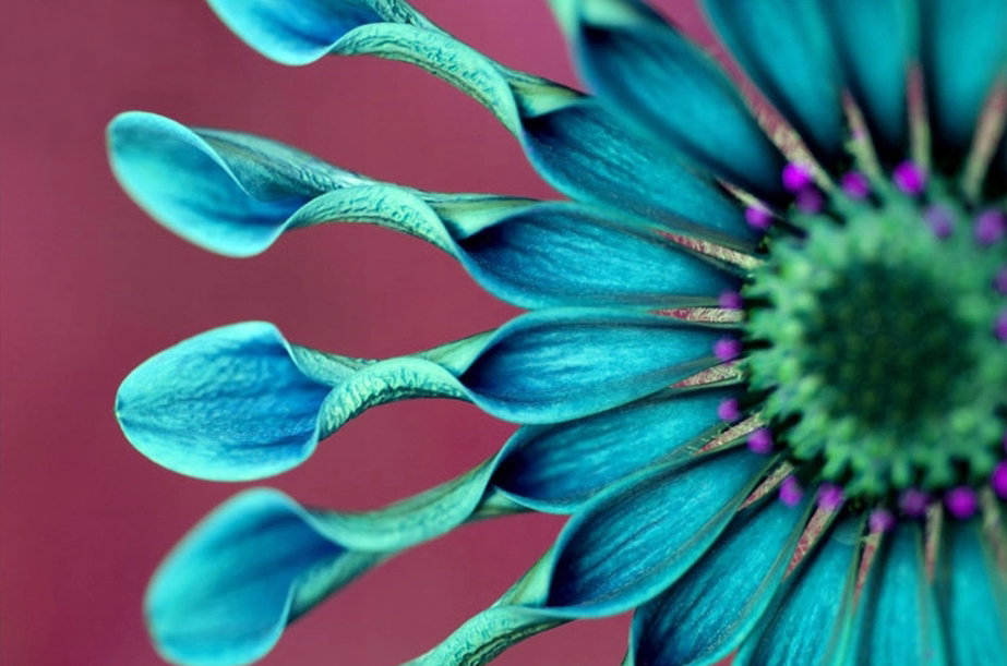 "3D Фотообои ""Голубой цветок"""