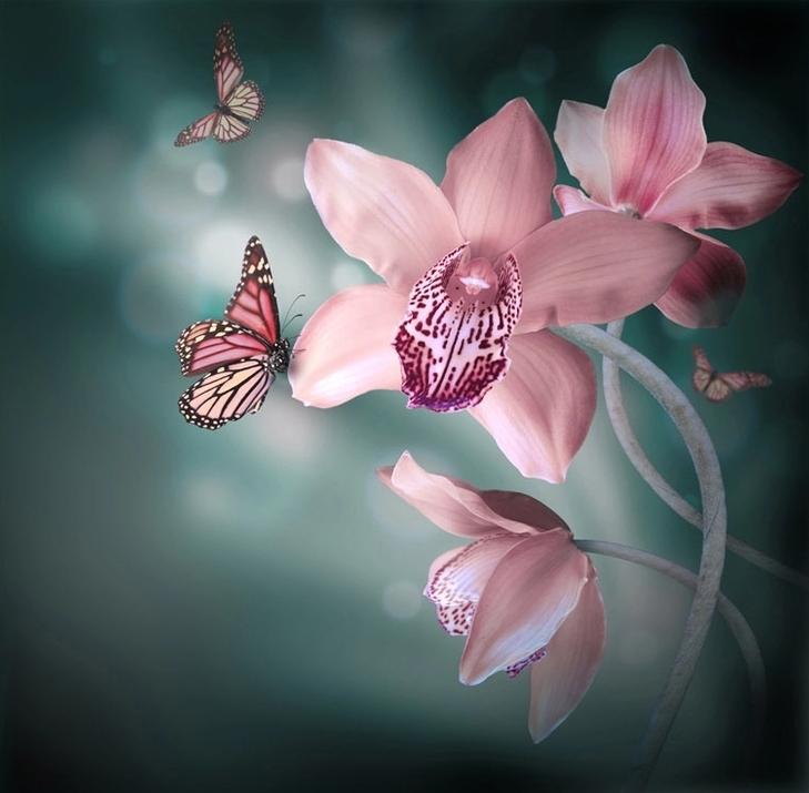 """3D Фотообои """"Изящная орхидея"""""""