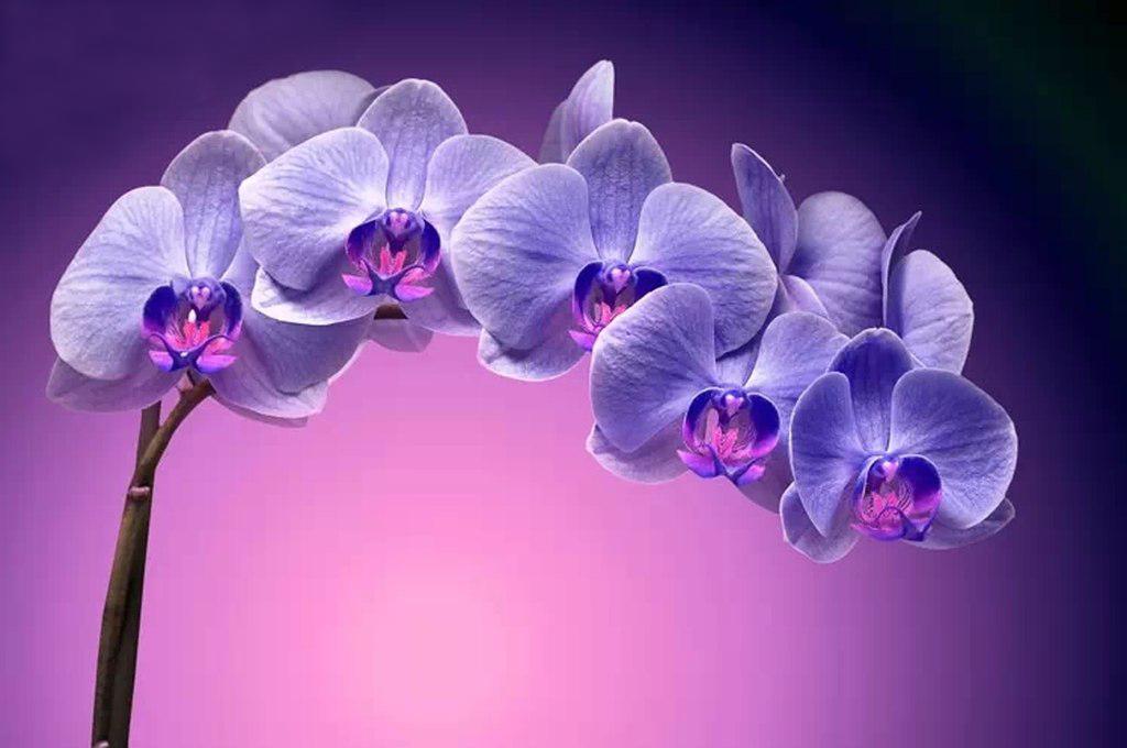 """3D Фотообои """"Фиолетовая орхидея"""""""