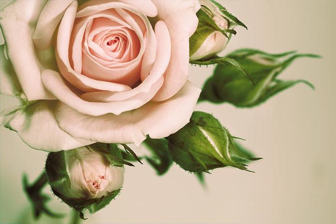"3D Фотообои ""Роза"""