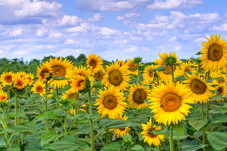 Август цветы картинки