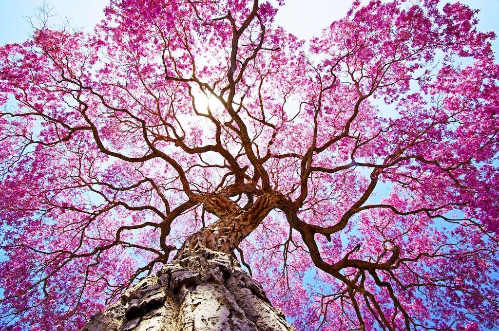 """3D Фотообои  """"Цветущее дерево"""""""