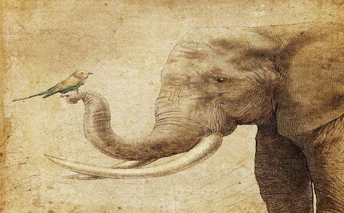 Детские 3D Фотообои «Слон и птичка»<br>kit: None; gender: None;