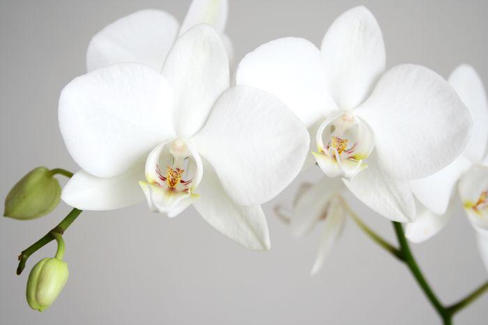 3D Фотообои «Пара белых орхидей»<br>kit: None; gender: None;