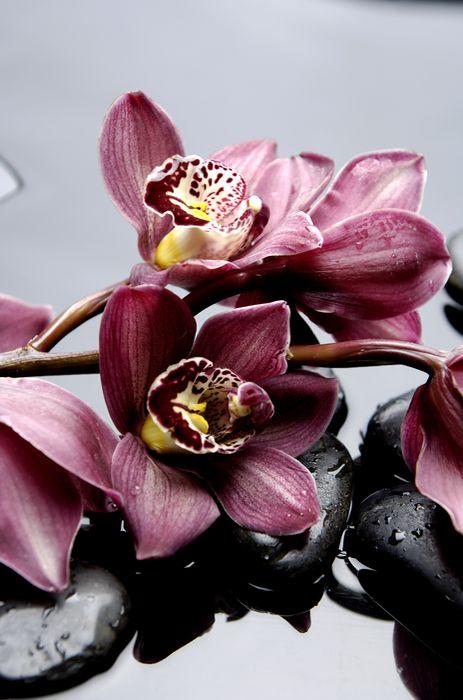3D Фотообои «Прекрасные орхидеи на камнях»<br>kit: None; gender: None;