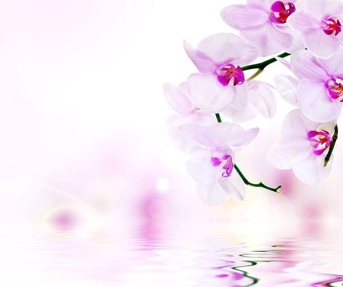 3D Фотообои «Нежные орхидеи над водой»<br>kit: None; gender: None;