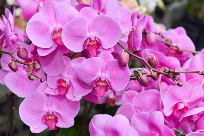 3D Фотообои «Изобилие фиолетовых орхидей»<br>kit: None; gender: None;