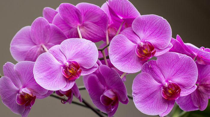 3D Фотообои «Очаровательные орхидеи»<br>kit: None; gender: None;