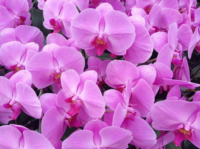3D Фотообои «Цветки орхидеи»<br>kit: None; gender: None;
