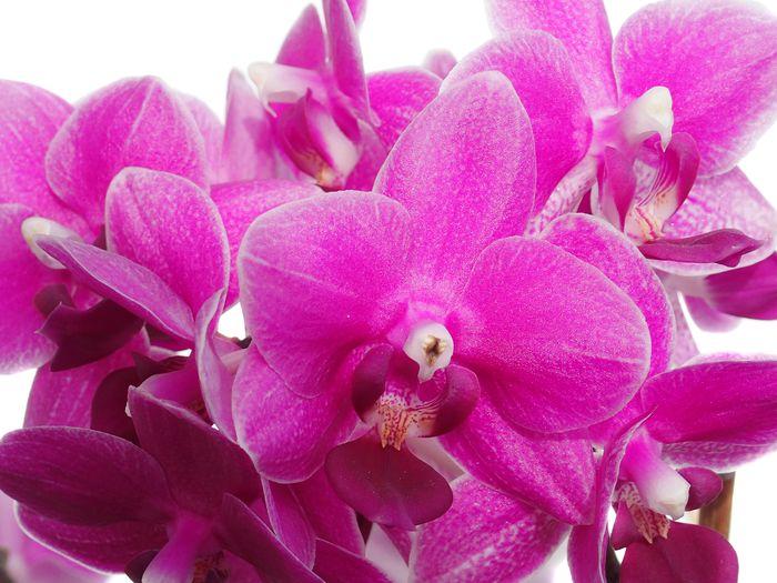 3D Фотообои «Орхидеи цвета функции»<br>kit: None; gender: None;