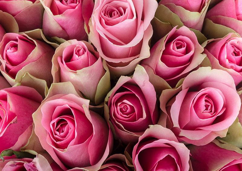 3D Фотообои Обилие розовых роз<br>kit: None; gender: None;