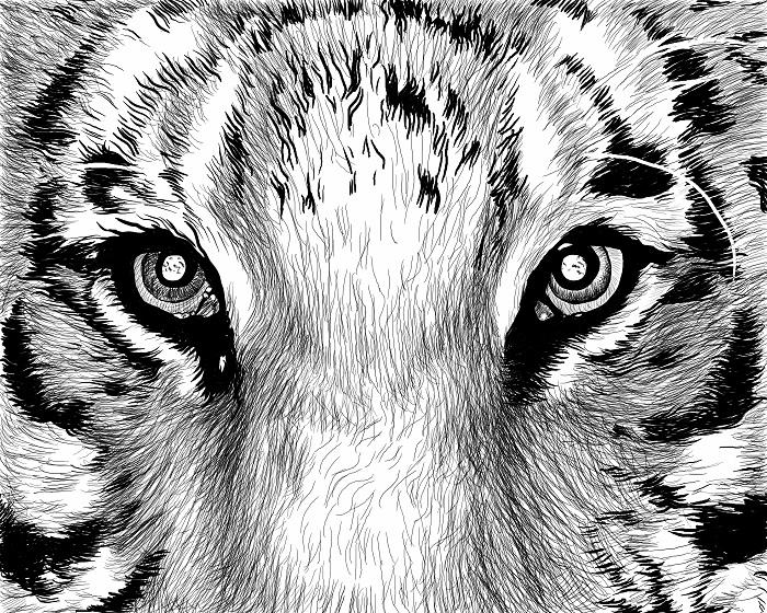 3D Фотообои Взгляд тигра<br>kit: None; gender: None;