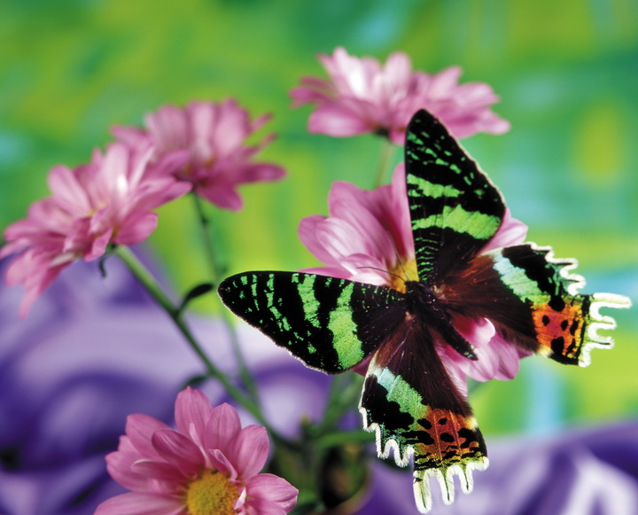 "3D Фотообои  ""Бабочка на цветке"""