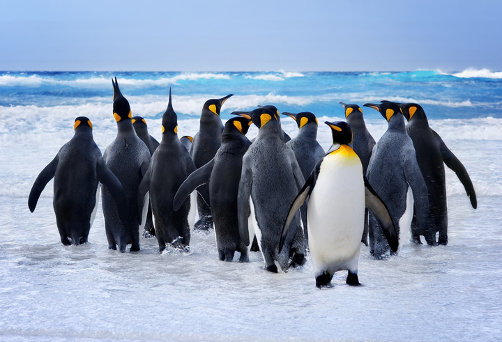 """3D Фотообои  """"Пингвины"""""""
