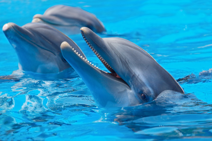 """3D Фотообои  """"Дельфины"""""""