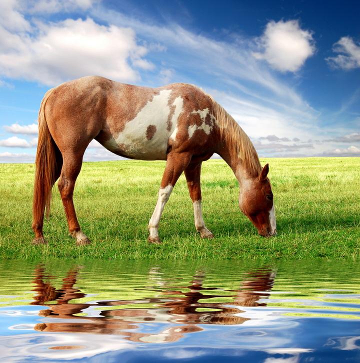 """3D Фотообои  """"Лошадь на лугу"""""""