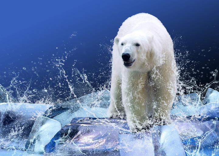 """3D Фотообои """"Белый медведь на льдине"""""""