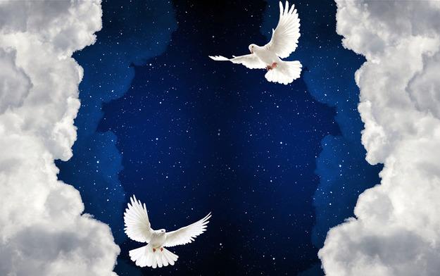 """3D Фотообои  """"Птицы в ночном небе"""""""