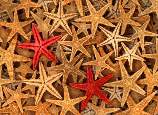 """Фотообои """"3D Фотообои  """"Морские звезды"""" """""""