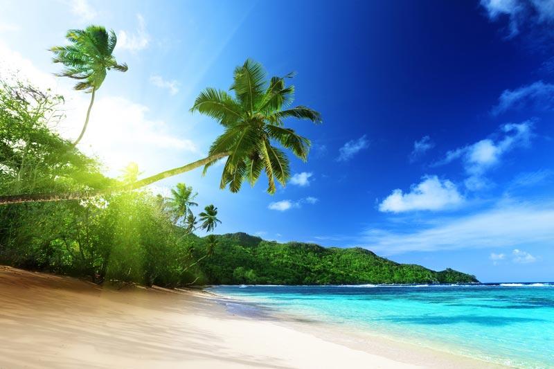 """""""Пальма на пляже"""" вид 1"""
