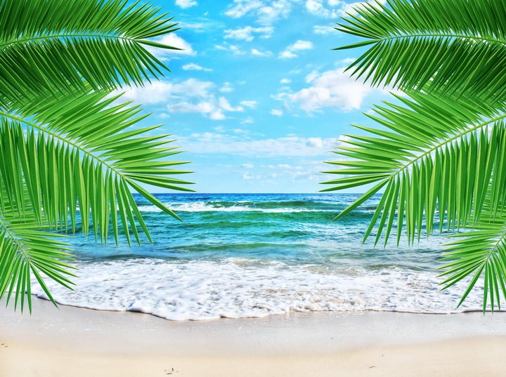 """3D Фотообои  """"Ветви пальмы"""""""