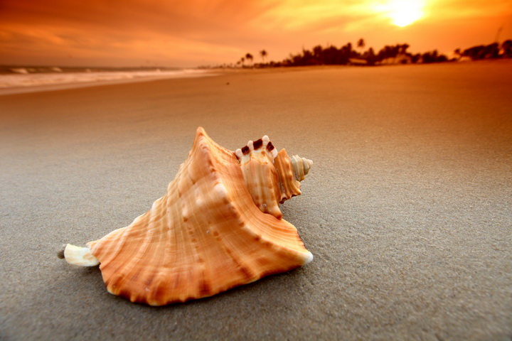 3D Фотообои  Ракушка на пляже<br>kit: None; gender: None;