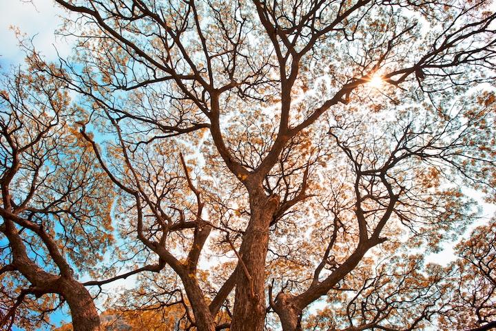 """3D Фотообои  """"Ветви осеннего дерева"""""""