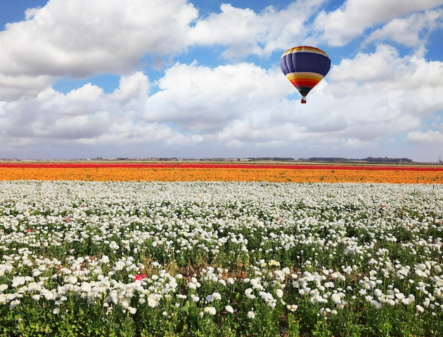 3D Фотообои  Воздушный шар над полем белых лютиков<br>kit: None; gender: None;
