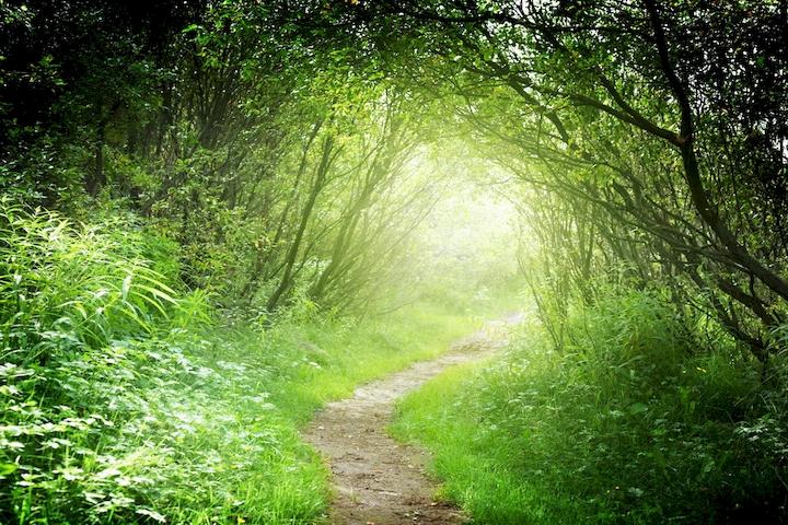 """3D Фотообои  """"Тропинка в зеленом лесу"""""""