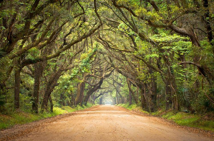 3D Фотообои  Дорога в тропическом лесуТропические леса – это огромные массивы, дыхательная система нашей планеты. Они вырабатывают большую часть кислорода для нас с Вами.<br><br>В тропическом лесу можно окунуться в необыкновенный мир биологического разнообразия, уникальные растения, деревья, экзотические цветы, все это процветает в гармонии с животными.<br><br>Красочные дикие тропические леса имеют обширный состав флоры и фауны.<br><br>3д Фотообои «Дорога в тропическом лесу» подарят Вам эксклюзивный дизайн комнаты, будут радовать Вас и Ваших близких даря комфорт и уют, удивлять своей красотой и уникальностью гостей.<br><br>?<br>kit: None; gender: None;