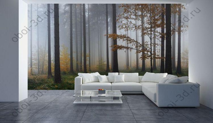 Деревья в тумане фотообои 5