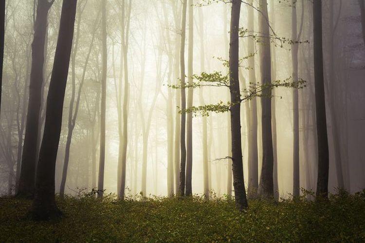 "3D Фотообои  ""Лес в тумане"" Природа"