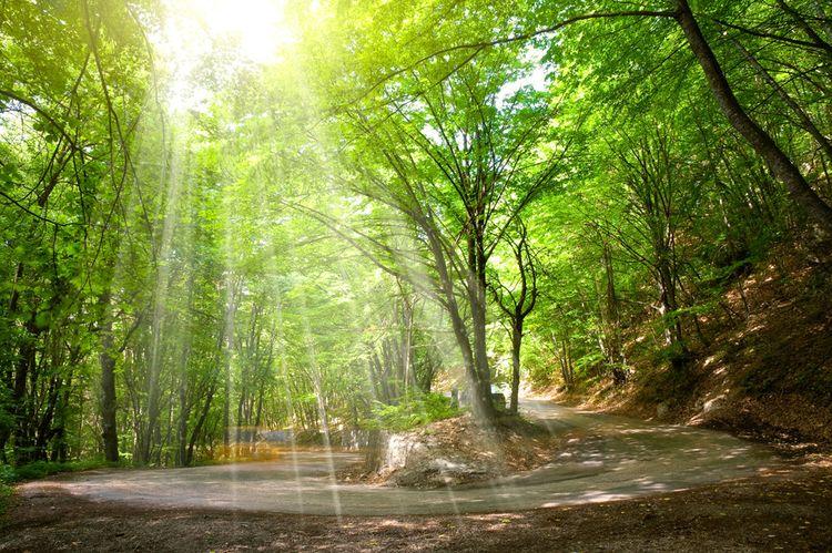 """3D Фотообои """"Дорога в солнечном лесу"""""""