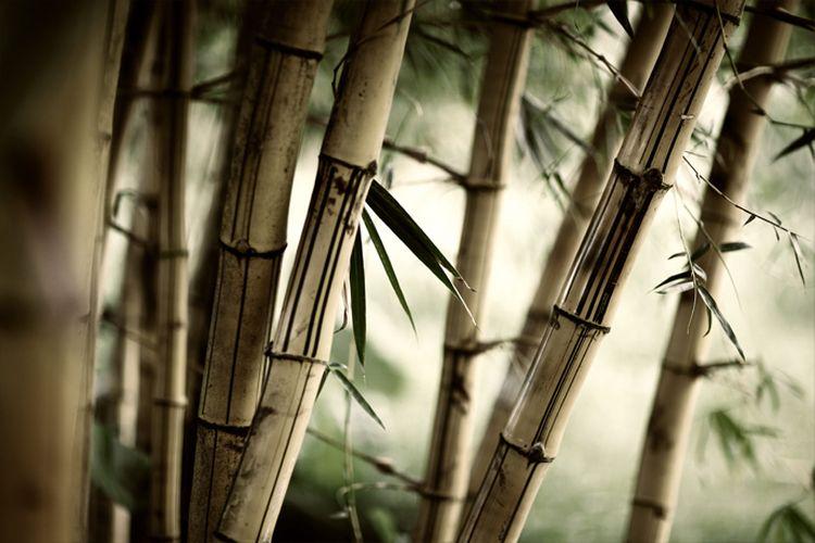 """3D Фотообои """"Бамбук"""""""