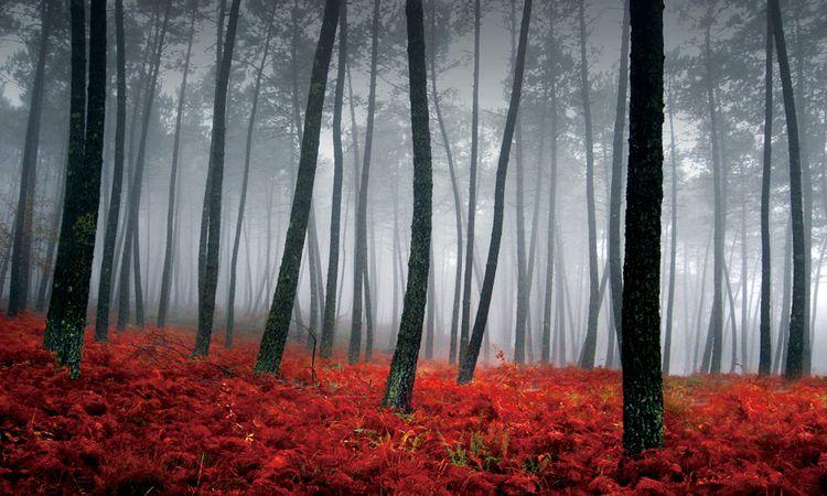 """3D Фотообои  """"Осенний лес в тумане"""""""