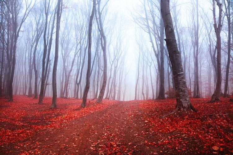 "Фотообои ""3D Фотообои  ""Осенний лес в тумане"" """