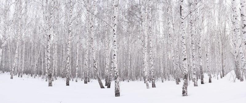 """3D Фотообои  """"Зимний лес"""""""