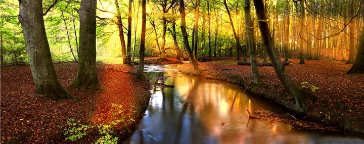 """Фотообои """"3D Фотообои  """"Река в лесу"""" """""""