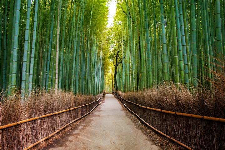 """3D Фотообои  """"Бамбуковый лес"""""""