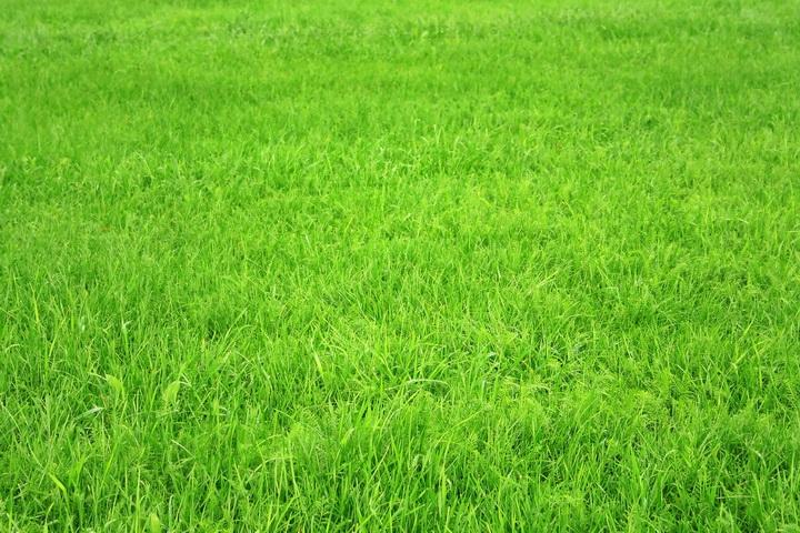 "3D Фотообои  ""Зеленая трава"""