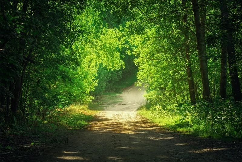 """Фотообои """"""""Тропинка в зеленом лесу"""""""""""