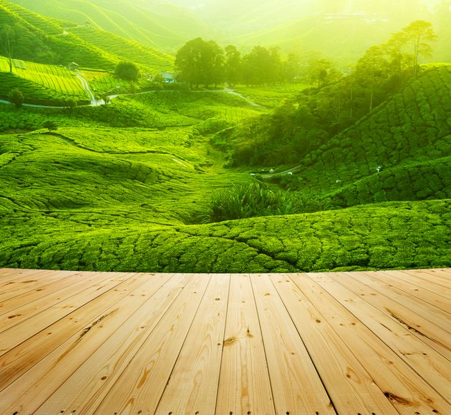 3D Фотообои «Яркая зеленая долина»<br>kit: None; gender: None;