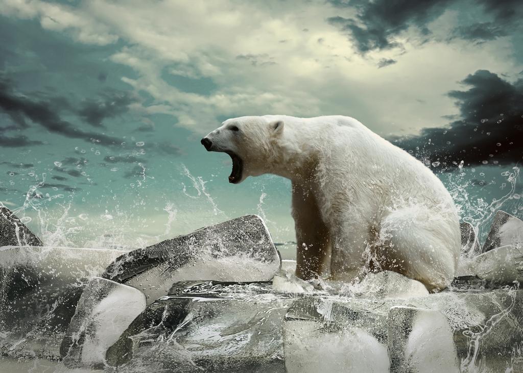 """3D Фотообои """"Белый медведь"""""""