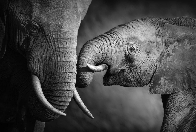 """3D Фотообои  """"Слоны"""""""