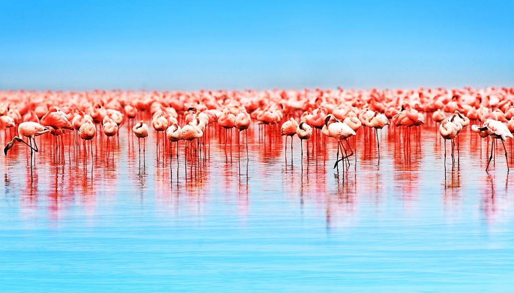 "3D Фотообои ""Фламинго"""
