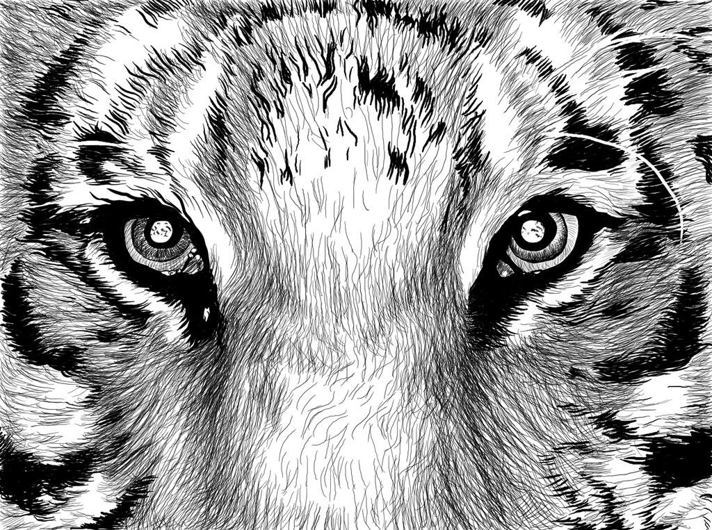 """3D Фотообои """"Взгляд тигра"""""""